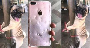 Nigerian lady punishes her dog for chewing her iPhone
