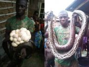 Man kills huge python in Bayelsa