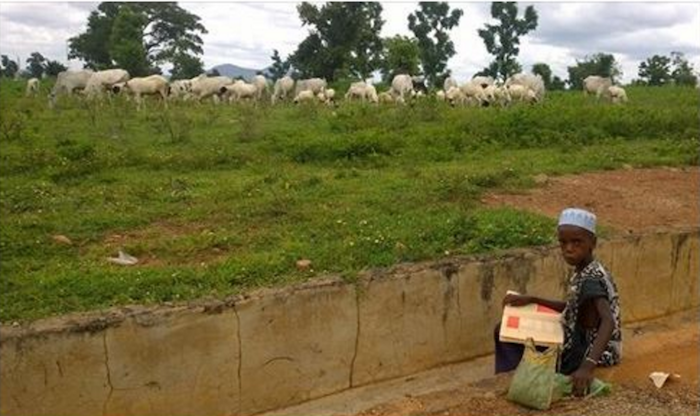 Photo of a young Fulani boy reading while he feeds his cows has melted everyone's heart theinfong.com 700x416