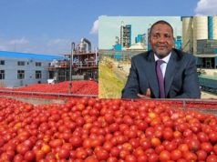 Dangote's tomato processing factory shuts down